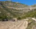 Vinos denominacion de origen Montsant Tarragona 6